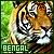 Tigers: Bengal