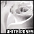  Roses: White