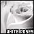 Roses: White